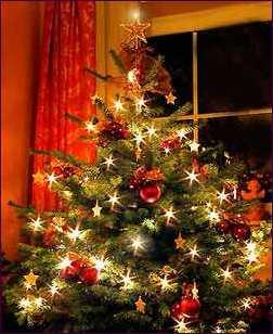 Kerstboom, maar waarom zetten wij een boom midden in de kamer?