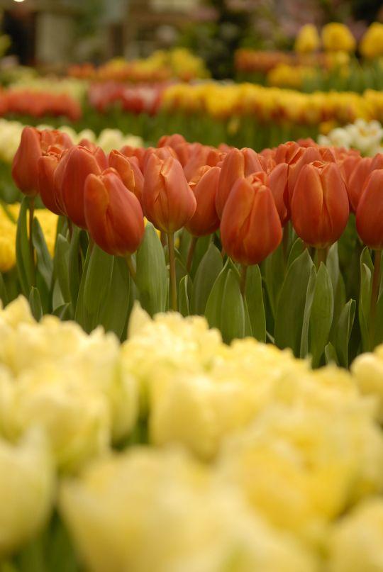 Wieringen goed vertegenwoordigd op beurs bij lentetuin breezand - Beurs geopend op de tuin ...
