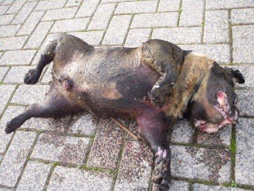Afschuwelijke Actie Dierenbeul Hond Verdronken In Kooi